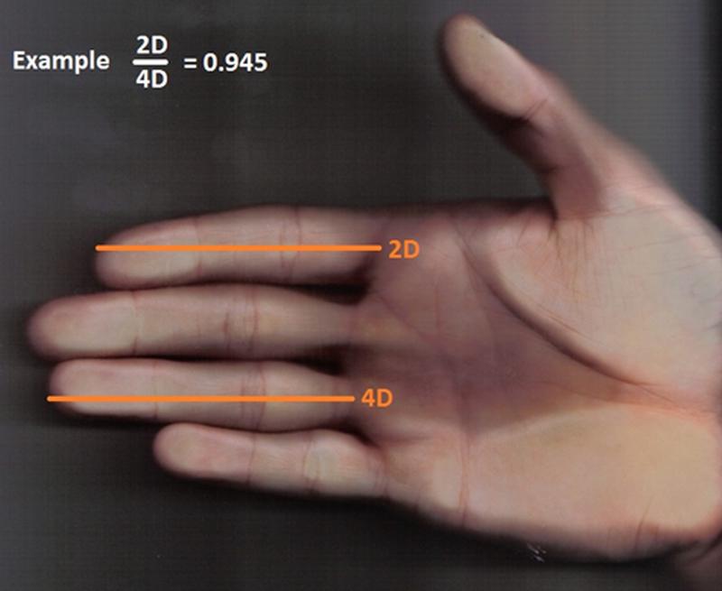 longer ring finger